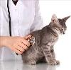 Ветеринарные клиники в Чердыни